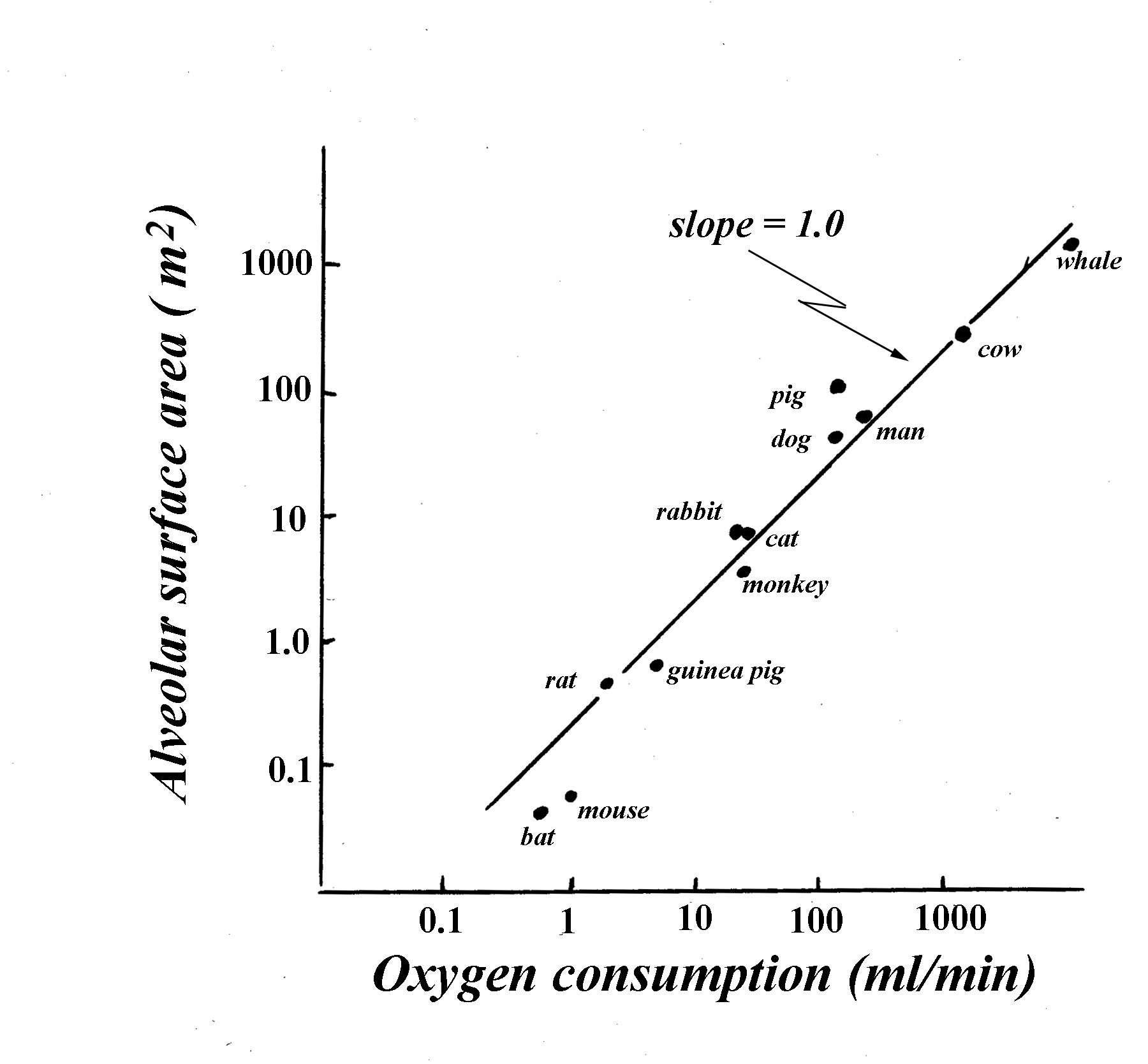 pressure volume relationship during respiration in fish what percentage