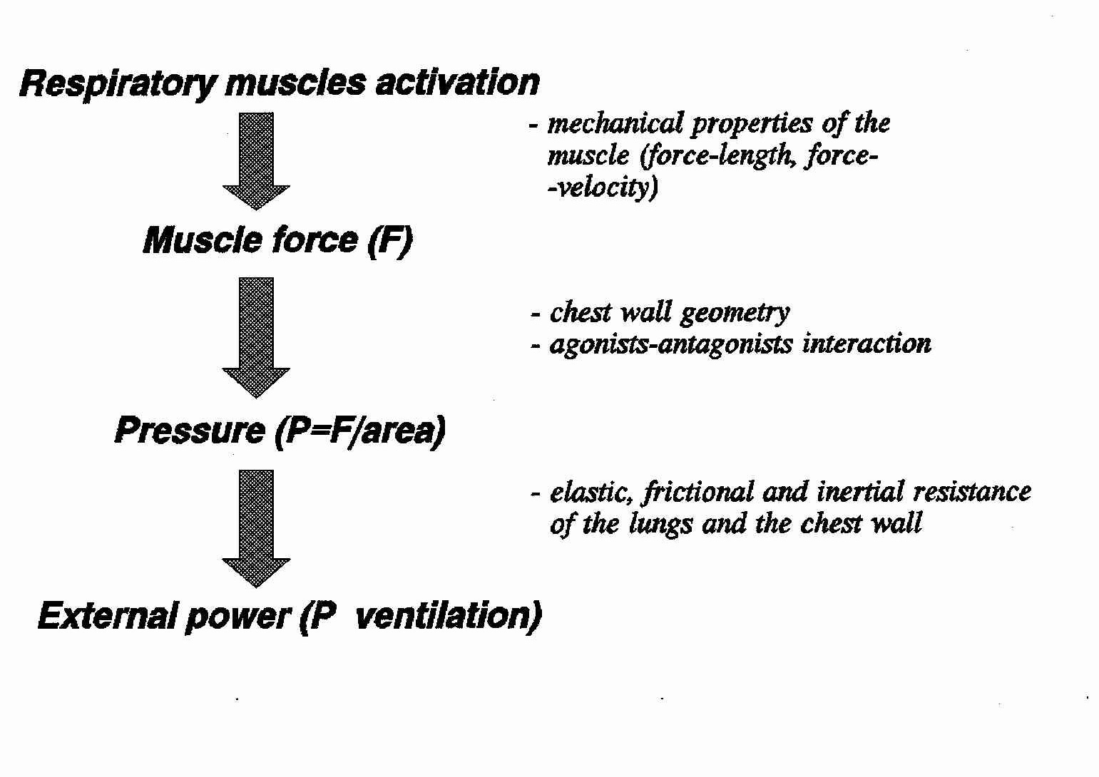 Text3 Air Resistance Diagram Free Body Movies In The Sequence Of Events Translating Muscle Activation Into Ventilation And Factors Involved Each Step