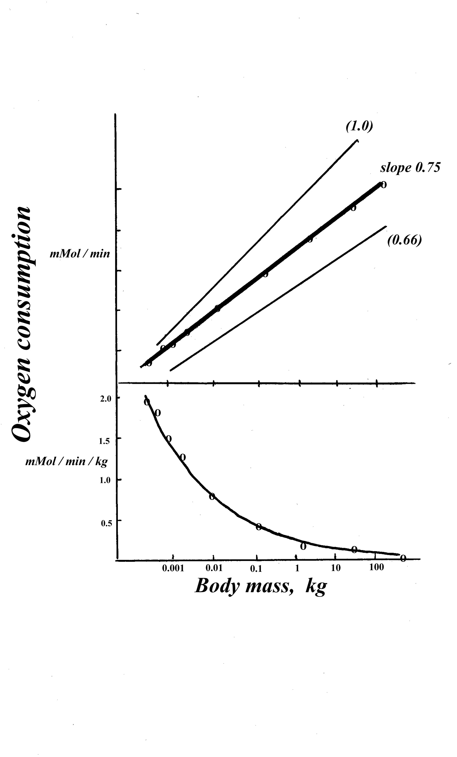 Functional Design Of The Respiratory System Inhalation And Exhalation Diagram Breathing Activity Fig14 Function Relating A Species Resting Oxygen Consumption Vo2 To Its Body Mass Mouse Elephant Curve Indicates Progressive Reduction In