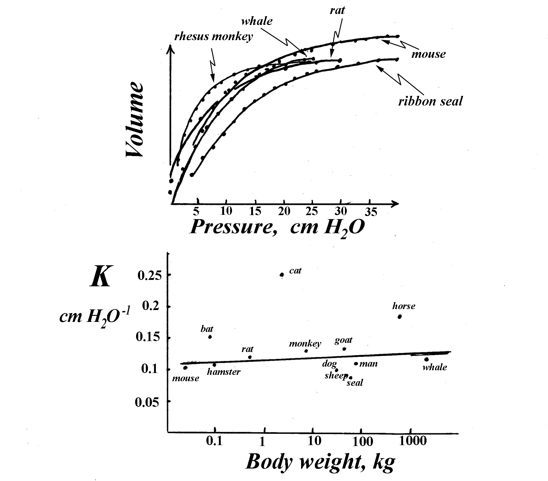 Functional Design Of The Respiratory System Inhalation And Exhalation Diagram Breathing Activity Fig15 Pressure Volume P V Curve Lungs During Deflation From Maximal Plateau In Several Mammals Shape Is Remarkably