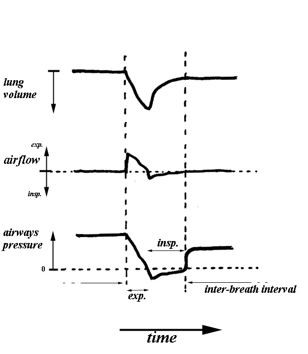 Fig1 9g the respiratory pause between breaths is usually at a lung volume above the resting volume of the respiratory system with positive pressure in the ccuart Gallery