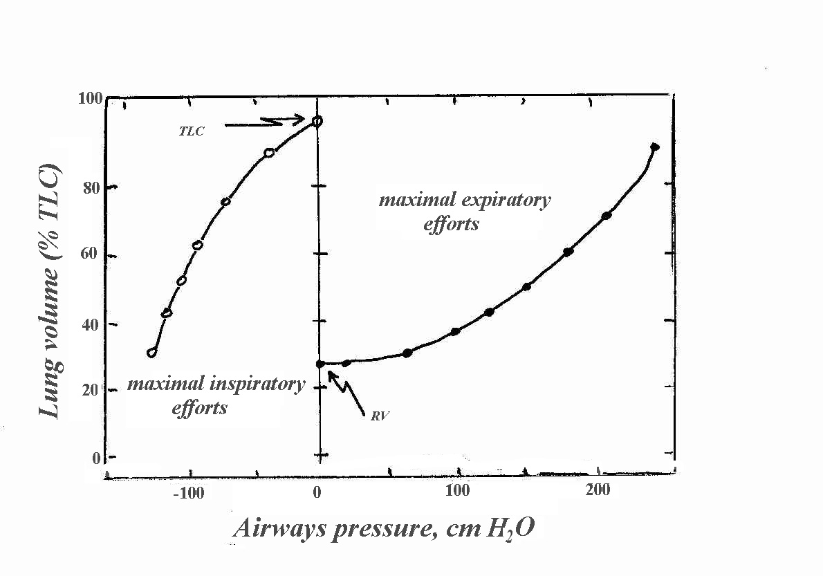 Text3 Inhalation And Exhalation Diagram Below Is A Of These
